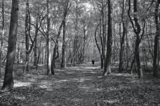 The forest of feelings